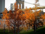 Brooklyn Bridge and Autumn trees, Brooklyn Bridge Park.