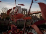 Autumn leaves, Brooklyn Bridge Park.