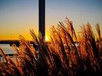 Grasses at Sunset, Eire Basin Park