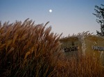 Grasses and moon, Eire Basin Park